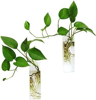 Ivolador 2PCS Wall Hanging Glass Plant Terrarium Container Rectangle Shape Perfect for Home Office Garden Decor Wedding