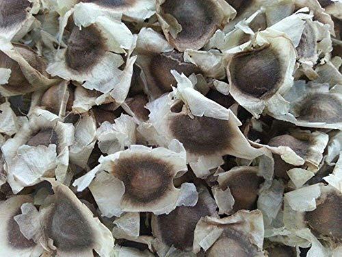 Potseed Keimfutter: 50 Moringa-Samen - US verzollt - Oleifora Moringa-Baum/Sausage Tree