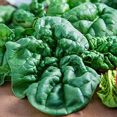 Spinach, Bloomsdale Long Standing Spinach Seeds, 500 Heirloom Seeds Per Packet,...