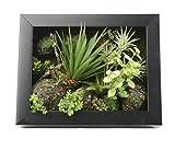 Support mural 3D Fleurs Artificielles Succulente plantes herbe vert Aloe feuilles mousse avec pierre imitation Cadre photo en bois Forme Vase décoration, 20x 25cm