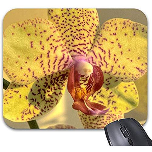 Alfombrilla de ratón de diseño Moderno 30 * 25 * 0,3 cm Alfombrilla de Escritorio Familiar y de Oficina Phalaenopsis Amarilla Manchas púrpuras Imprimir Alfombrilla de ratón Accesorios de computadora