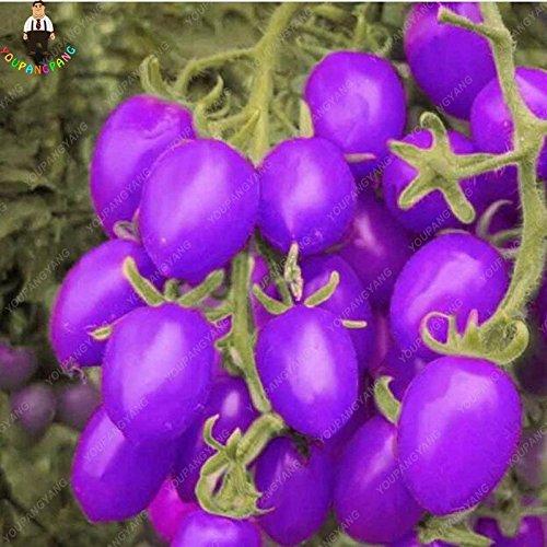 100pcs Violet Tomates cerises Graine Fruits et légumes Balcon Bonsai Seed Facile à cultiver jardin Plantes en pot multicolores