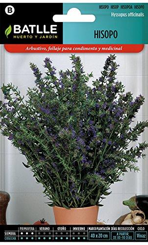 Graines aromatiques de Batlle - Hysope (Seeds - 50cm)