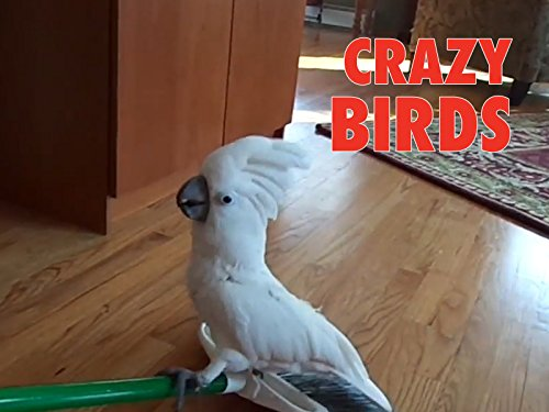 Clip: Crazy Birds