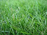 Best Bermuda Grass Fertilizers - HULLED Coated Bermuda Grass 5 LB Review