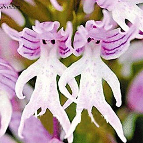 Portal Cool 50Pcs: Rare Monkey Face Orchideensamen Topf Bonsai Orchideen-Blumensamen S5Dy