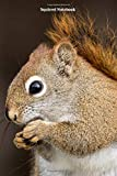 Squirrel Notebook: Squirrel notebook blank pages - Journal to write in - 120 pages - 6x9