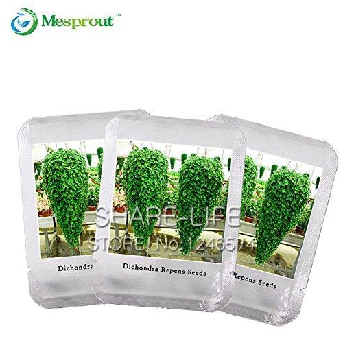 Graines Dichondra Repens gazon Hanging Jardin des Plantes décoratives Bonsai facilement en pot 100% Vrai Seed 100 pcs / sac