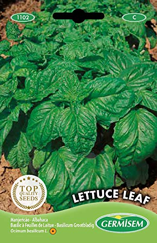 Germisem Lettuce Leaf Semi di Basilico 3 g