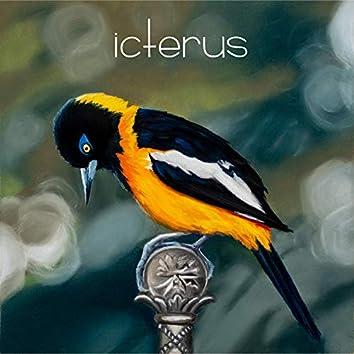 Icterus