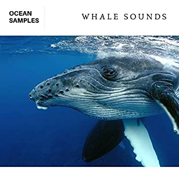 Whale & Dolphin Sounds