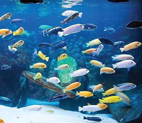 Best Cichlids For Aquarium