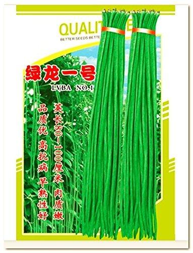 50 Samen Spargelbohne, Vigna unguiculata subsp. sesquipedalis, bis 1,2m lang