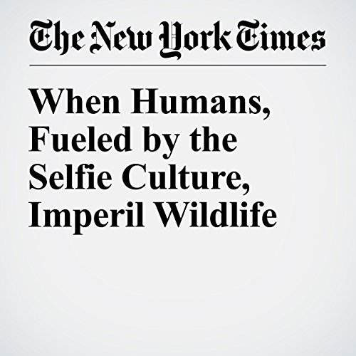 When Humans, Fueled by the Selfie Culture, Imperil Wildlife cover art