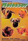 Molosser: Kampfmaschine? Karikatur? Kamerad? Vorstellung von sieben großen Hunderassen. Dogue de Bordeaux - Mastiff - Bullmastiff - Mastino Napoletano ... und Mastin Espanol (Das Hundeportrait)