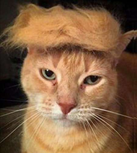 Fuji Peluca de gato para mascotas, disfraz de cabeza de perro, juguete para Halloween, Navidad, fiestas, festivales
