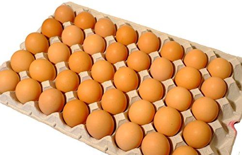 訳あり たまご 北海道発、平飼いで育てた純国産鶏の有精卵 10kg(1個あたり約28円)