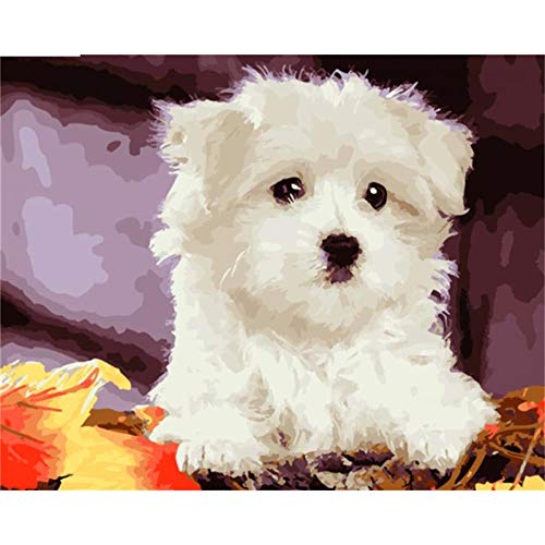 wxxxj Colour Talk Paint By Numbers For Adults And Kids DIY Oil Painting Kit Beginner- White bichon friseKits on Canvas Acrylic Wall Decoration -30x40cm