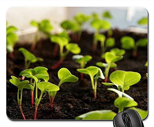 Mauspad - Radieschen Pflanze Spross Gemüse Anbau Lebensmittel