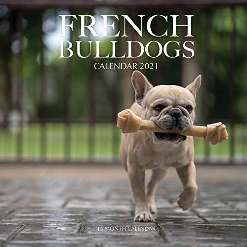 French Bulldogs Calendar 2021: 16 Month Calendar