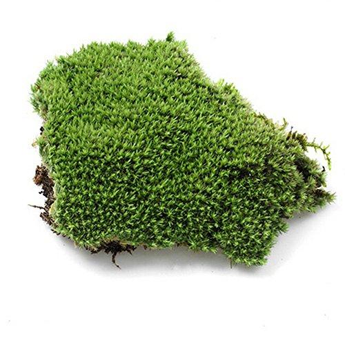 LNIMIKIY Planta Artificial erba Musgo Piedras Musgo Artificial Simulación erba Bonsai DIY Decoración del Paisaje Bola Musgo Terrario Decorativo(Verde)