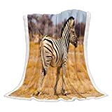 Teamery Warm Cozy Throw Blanket for Gifts Zebra on The Grasslands of South Africa 49'x79' Luxury Lightweight Sherpa Fleece Throw Blanket Modern Soft Bed Blanket for Winter, Sofa Couch