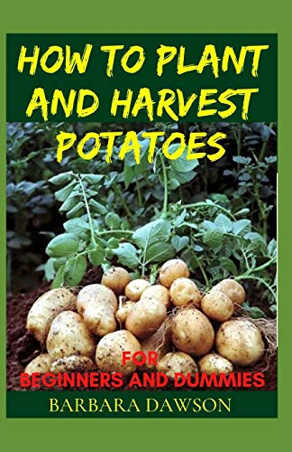 How to Plant and Harvest Potatoes for Beginners and Dummies