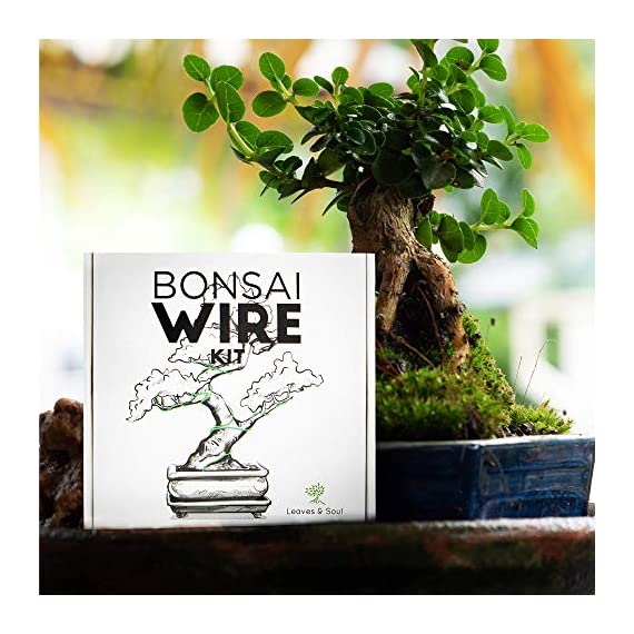 Leaves and soul tree training wire kit - 5 rolls (160ft) aluminum alloy bonsai plant training wire | wire cutter… 5 ✅ flexible but sturdy - our bonsai tree training wires are made of top-quality aluminum alloy, which is strong but easy to mold. They stand strong against rust and bends easily without breaking. ✅ meets different needs - this plant wire set has different sizes of training wires including 1. 0mm, 1. 5mm, 2. 0mm, 2. 5mm, and 3. 0mm wires, all with a length of 32 feet. Total of 160 feet of wire for all of your projects. They can also be used for handmade craft making, sculpture projects and jewelry making. ✅ cuts easily - our gardening kit comes with a high quality traditional bonsai wire cutter. This tool can cut the thickest aluminum wire effortlessly.