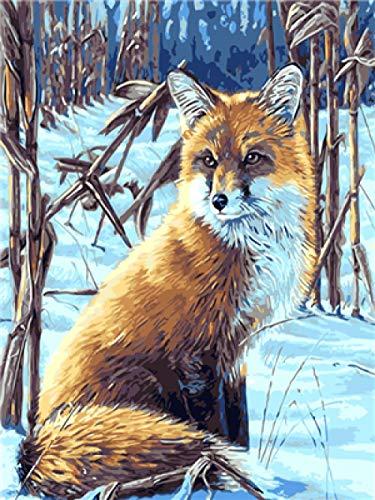 Schnee-Fuchs mit auswechselbarer Sch/ürfleiste NEU Schneeschieber