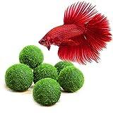Luffy Nano Betta Balls, 0.4-inches, Live Round-Shaped Marimo Plant, Toys for Betta Fish, Hiding,...
