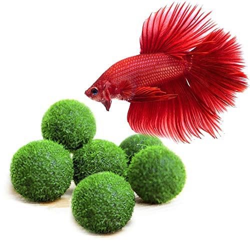 Luffy Nano Betta Balls, 0.4-inches, Live Round-Shaped Marimo Plant, Toys for Betta Fish, Hiding, Rolling, Nibbling, Cleans Aquarium Water & Adds Aesthetic Value to Betta Bowls and Jars, 6-Pieces