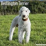 Bedlington Terrier 2022 - 16-Monatskalender: Original Avonside-Kalender [Mehrsprachig] [Kalender]: Original BrownTrout-Kalender [Mehrsprachig] [Kalender] (Wall-Kalender)