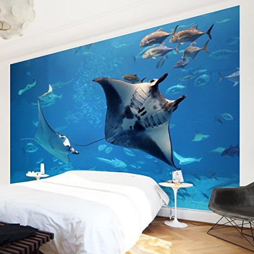 Apalis Vliestapete Manta Ray Fototapete Breit | Vlies Tapete Wandtapete Wandbild Foto 3D Fototapete für Schlafzimmer Wohnzimmer Küche | blau, 94968