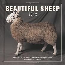Beautiful Sheep Calendar 2012