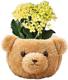 花のギフト社 カランコエ 花鉢 鉢植え フラワーギフト お花 くま 花 プレゼント