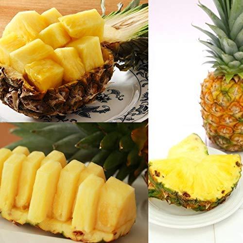 沖縄産パイナップル2玉~3玉(2.4㎏以上)沖縄旬青果