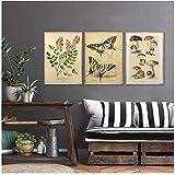 DLFALG Paleobios Planta Retro Poster Flor Insecto Mariposa Setas Lienzo Pintura Arte de la pared Imágenes Impresiones Sala de estar Decoración para el hogar-40x60cmx3 Sin marco