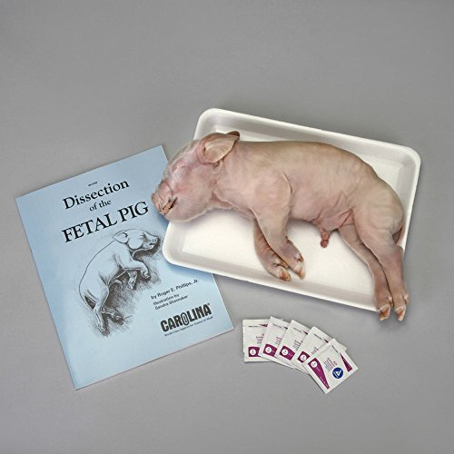 Carolina Pig Anatomy Dissection Kit