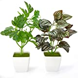 Get YOLETO 2 Pack Artificial Plants in Pots for Home Decor Indoor Aesthetic, Small Décor Faux Fake Plant for Desk and Shelf in Bathroom / Bedroom / Living Room / FarmhouseDecorations Just for $8.99