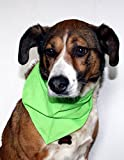 Halstuch Maxi für größere Hunde (Haustire) bedruckt - 3