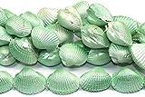 1001 - Cuerda de Concha (20 x 25 mm/40 cm), Color Verde Menta