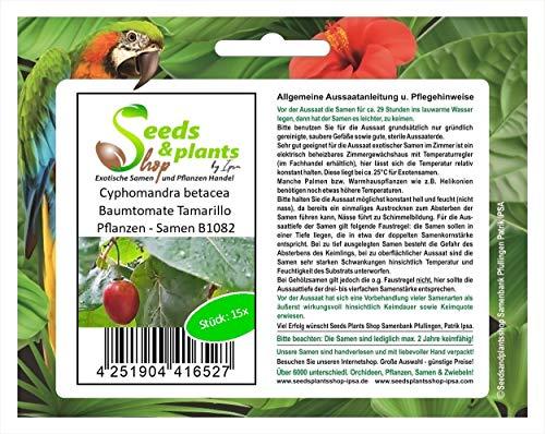 Stk - 15x Cyphomandra betacea Baumtomate Tamarillo Pflanzen - Samen B1082 - Seeds Plants Shop Samenbank Pfullingen Patrik Ipsa