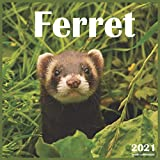 Ferret: 2021 Wall & Office Calendar, 12 Month Calendar
