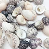 PEPPERLONELY Natural Sea Shells Nerite Snail Shells Mixed, 1/2 Inch to 1 Inch, 8 oz, Apprx 80+ Shells