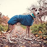 Teal Blue Fleece Lined Waterproof Coat Whippet Greyhound, with matching Adjustable Clip Strap Lurcher/Italian Greyhound/Sighthound (XSMALL 14')