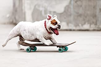 Best skateboard pictures to print Reviews