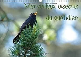 Merveilleux Oiseaux Du Quotidien 2017: Le Quotidien Offre Tant De Merveilles Naturelles Au Travers Des Oiseaux Du Jardin. (Calvendo Animaux) (French Edition)