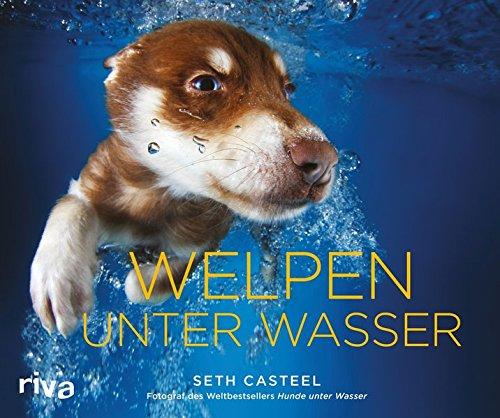 Welpen Unter Wasser Fotograf Seth Casteel Mit Neuem Buch