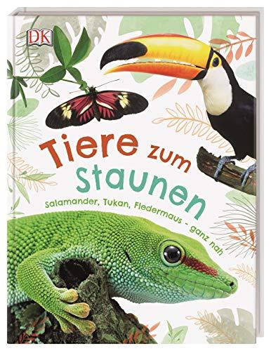 Tiere zum Staunen: Salamander, Tukan, Fledermaus - ganz nah
