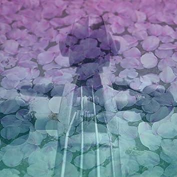 Viola Zen Garden